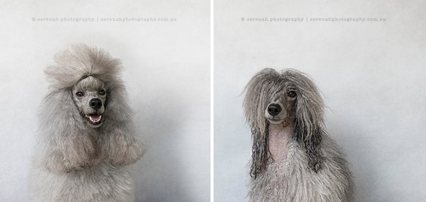 animal-portraits-dry-wet-dog-serenah-hodson-11
