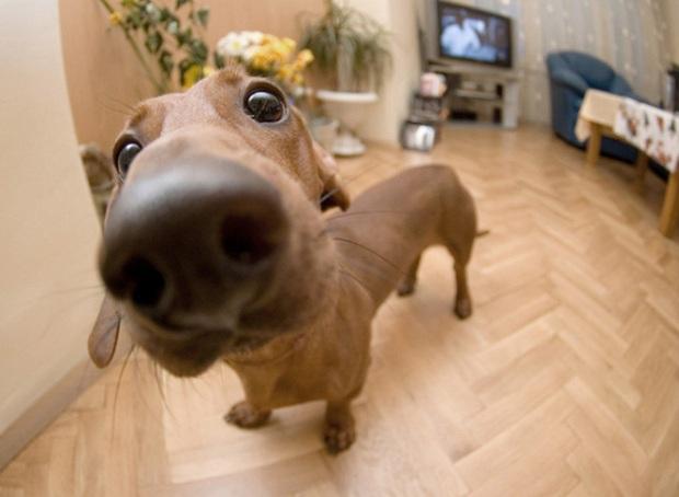 funny-dog-nose-closeups-18__7001-654x479
