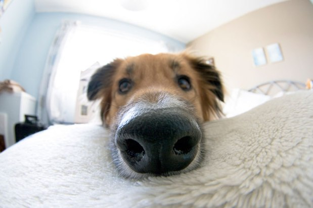 funny-dog-nose-closeups-222__700