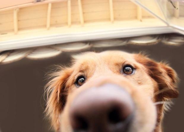 funny-dog-nose-closeups-22__700-666x479