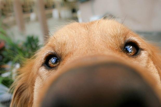 funny-dog-nose-closeups-321__700