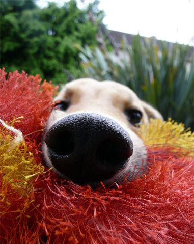 funny-dog-nose-closeups-33__700-381x479