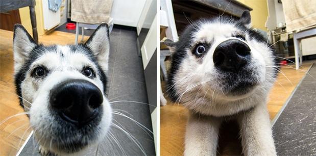 funny-dog-nose-closeups-341__700
