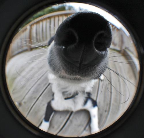 funny-dog-nose-closeups-361__700-500x479
