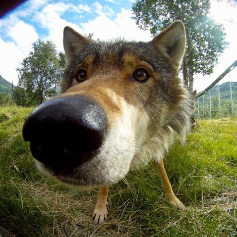 funny-dog-nose-closeups-371__700-478x479