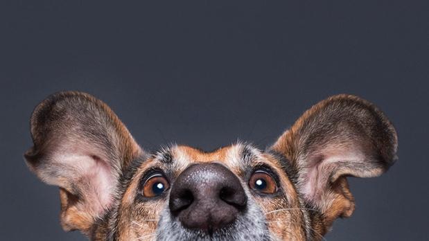 funny-dog-nose-closeups-44__700